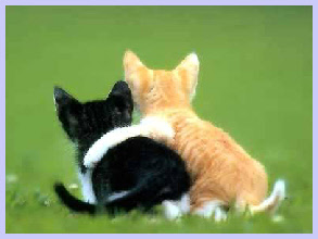 sarasota/bradenton cat adoption
